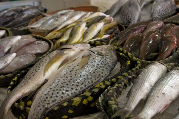 Baskets with all kinds of sea products at a stall at the Kuwaiti fish suq | Mercado de Peces Kuwait | Kuwait