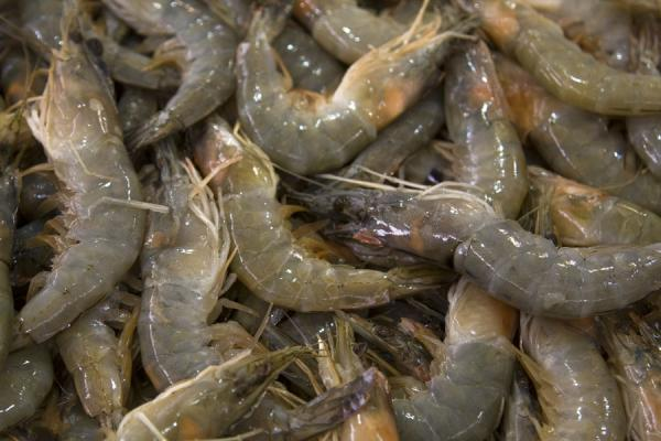 Foto de Shrimps for sale at the fish suq of KuwaitMercado de Peces Kuwait - Kuwait