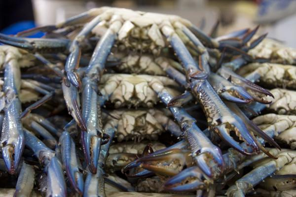 Blue-pinced crabs for sale at the fish market of Kuwait | Kuwait Fish Suq | Kuwait