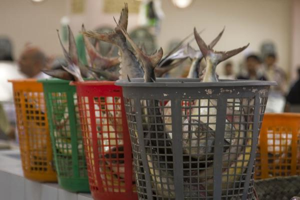 Fish in a basket at the fish market in Kuwait | Koeweit Vismarkt | Koeweit