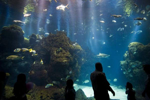 People watching the fish inside the big tank of the aquarium | Scientific Center | Kuwait