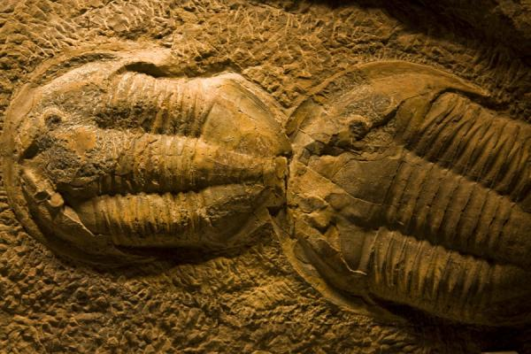 Picture of Fossils in the aquarium of the Scientific Center