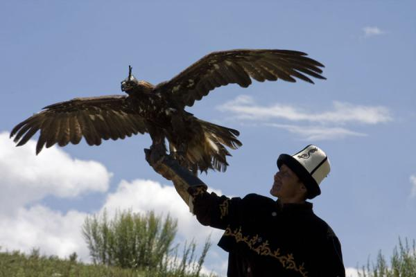 Talgar with his eagle Tumara | Eagle hunting | Kyrgyzstan