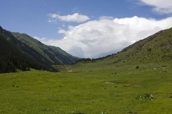 The lower Arashan valley covered with grass | Palatka Glacier | Kyrgyzstan