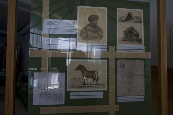 Picture of Przewalski horse explained in the museum