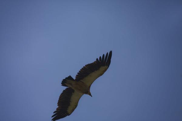Photo de One of the birds of prey circling above Song-KölLac Song-Köl - Kirghizistan