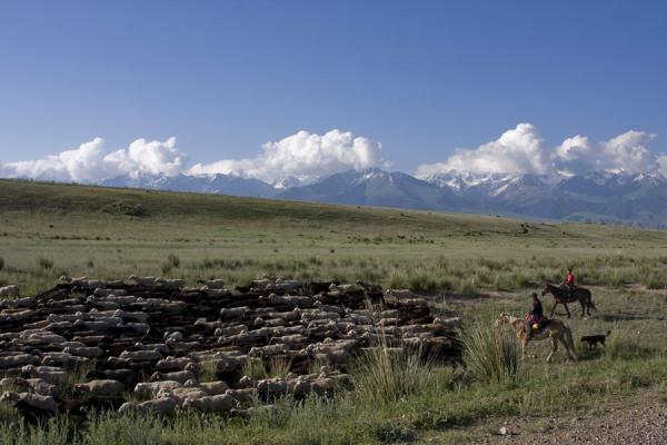 Herding sheep in the Tien Shan mountains, on the way to Torugart | Torugart border crossing | Kyrgyzstan