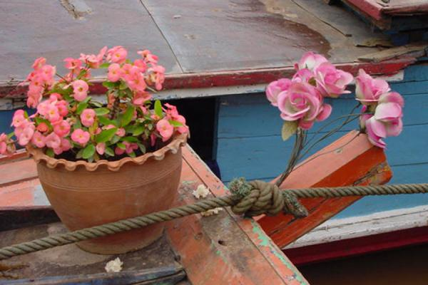 Picture of Flowers on the bowFast Slow Boat - Laos