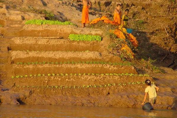 Picture of Irrigation of temporary gained landsFast Slow Boat - Laos