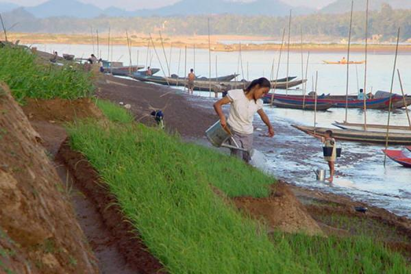 Working the lands | Laos Mekong River | Laos