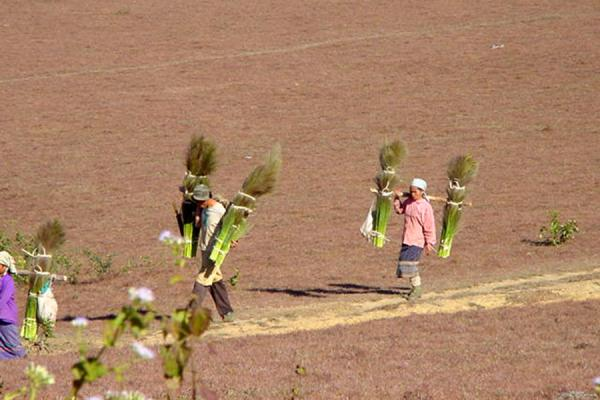 Picture of Plain of Jars (Laos): Workers in Plain of Jars