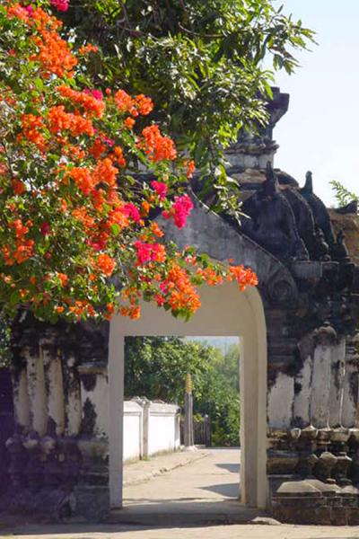 Abundancy of flowers  | Wat Xieng Thong | Laos