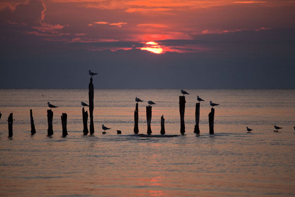 Photo de Seagulls resting on poles near Cape Kolka at sunriseSlītere - Lettonie