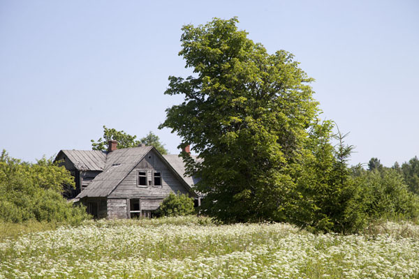 Picture of Slītere National Park (Latvia): Flowers surrounding a traditional wooden house in Slītere National Park