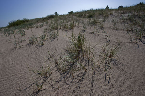 Picture of Slītere National Park (Latvia): Grass growing on the sandy beach near the Lviv village of Mazirbe
