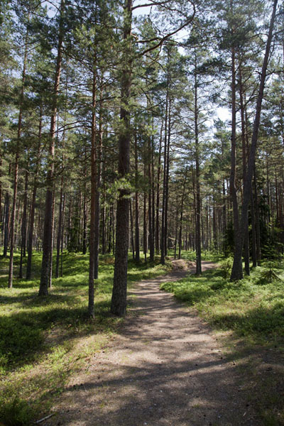 Picture of Trail running through the woods in Slītere National Park