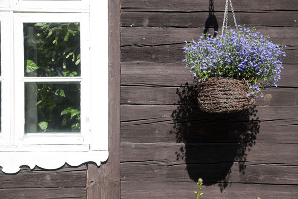 Picture of Slītere National Park (Latvia): Flowers on a traditional wooden house in Mazirbe