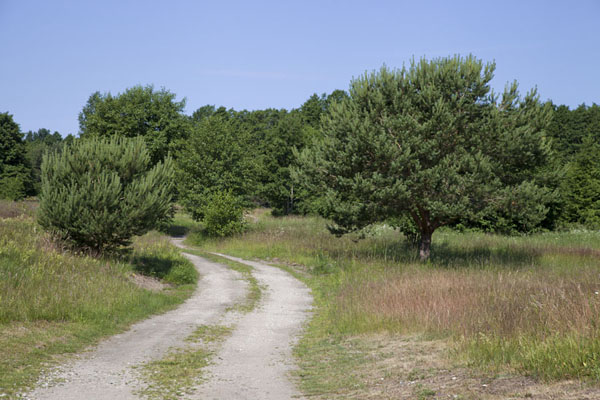 Picture of Slītere National Park (Latvia): Track running past trees in the landscape near Mazirbe