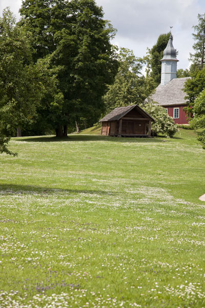 Flower and grass on the castle grounds of Turaida Castle with wooden church in the background | Turaida Castle | Latvia