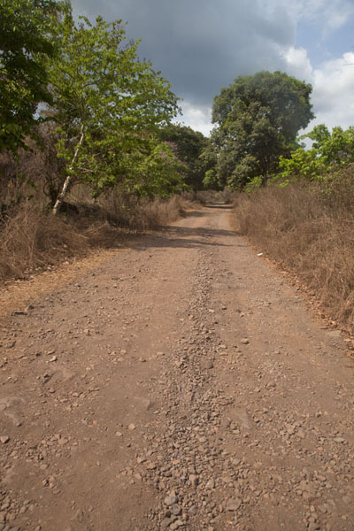 Track with mango trees leading to Blue Lake | Lago Blu di Bomi | Liberia
