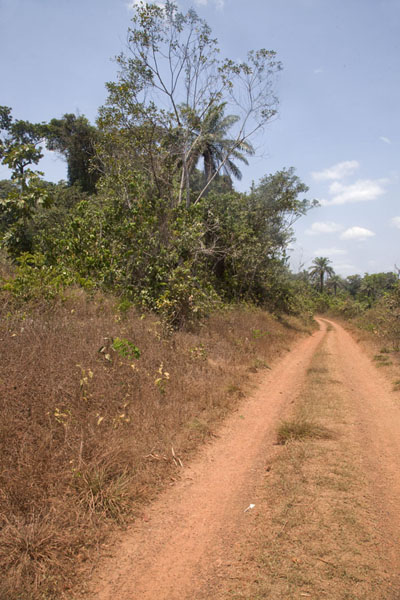 Foto van One of the tracks leading from Kinjor to neighbouring villages - Liberia - Afrika