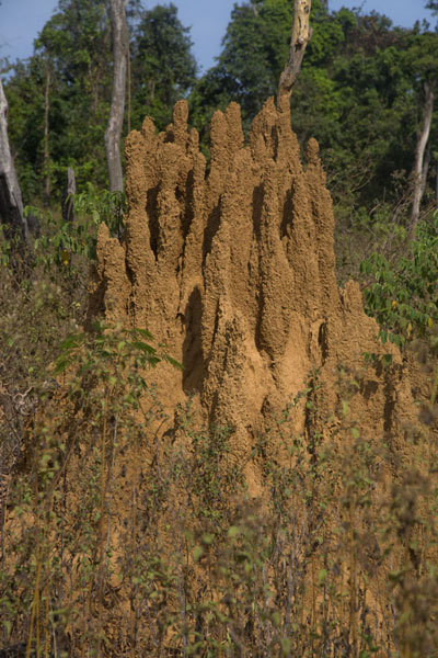 Foto de Termite hill outside KinjorKinjor - Liberia
