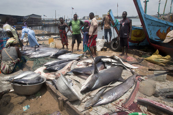 Photo de Small fish market with big fish in West Point, the main shanty town of Monrovia - Libéria - Afrique