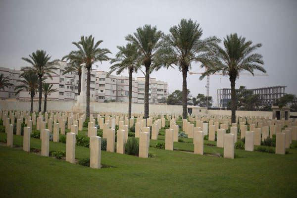 Foto di Tombstones and palm trees in the Commonwealth section of the cemetery - Libia - Africa