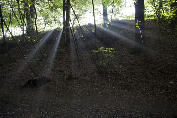 Foto van Rays of sunshine in the forest near the rock areaBerdorf - Luxemburg