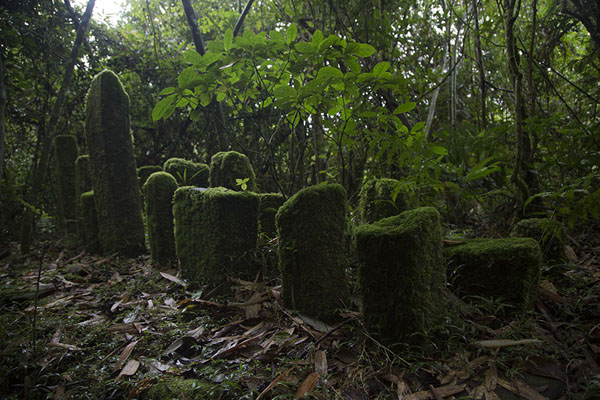 Picture of Ranomafana National Park (Madagascar): Moss covering stones erected by aboriginals