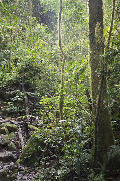 Photo de Trail through the secondary rainforestRanomafana - Madagascar