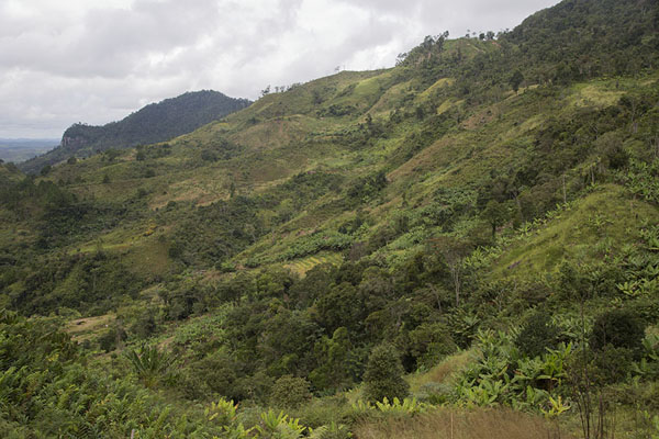 Picture of View of the open area of Ranomafana National ParkRanomafana - Madagascar