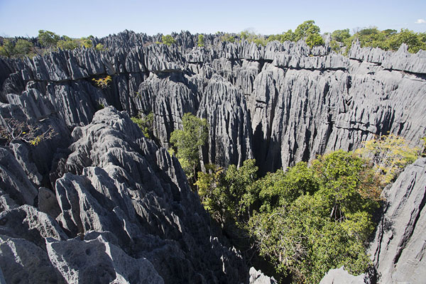 View from a lookout point over the tsingy | Tsingy Bemaraha | Madagascar