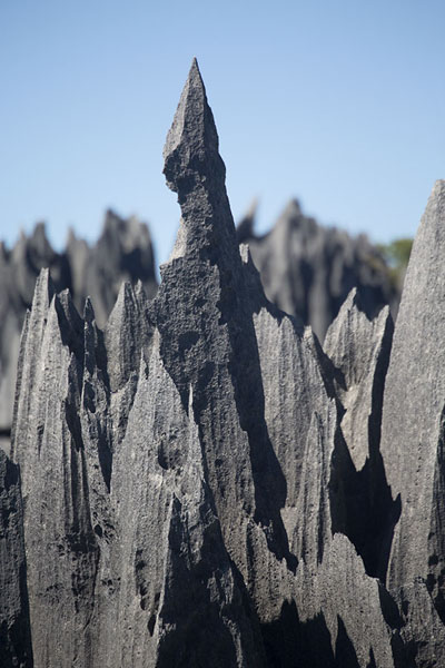 Picture of Tsingy Bemaraha (Madagascar): Close-up of a sharply defined limestone pinnacle