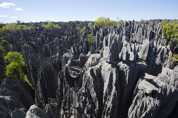Picture of Tsingy Bemaraha (Madagascar): View over one of the areas with tsingy