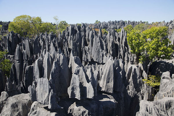 Picture of Tsingy Bemaraha (Madagascar): The tsingy pointing towards the sky