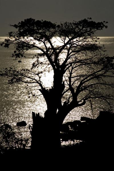 Picture of Chizumulu Island (Malawi): Baobab and Lake Malawi in the late afternoon