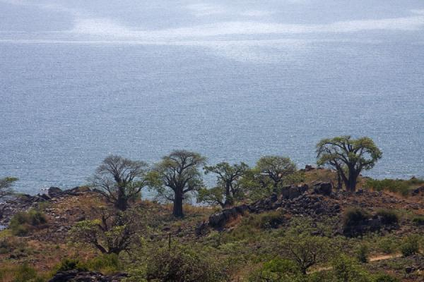 Foto de View over Lake Malawi with baobabs - Malawi - Africa