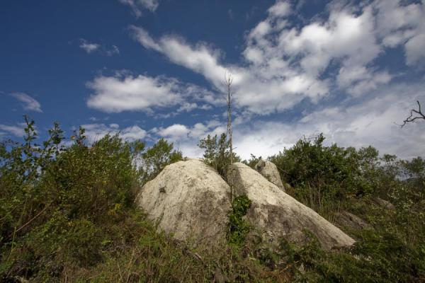 Foto de Rocks and shrubberies on Mount MulanjeMulanje - Malawi