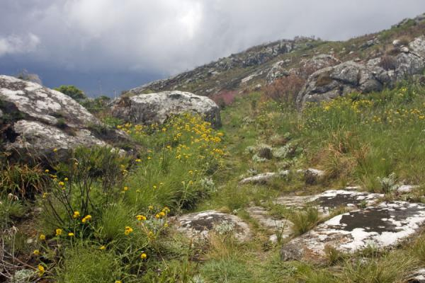 One of the many trails on Mount Mulanje |  | 马拉威