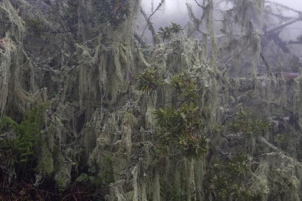 Close-up of trees on Mount Mulanje |  | 马拉威