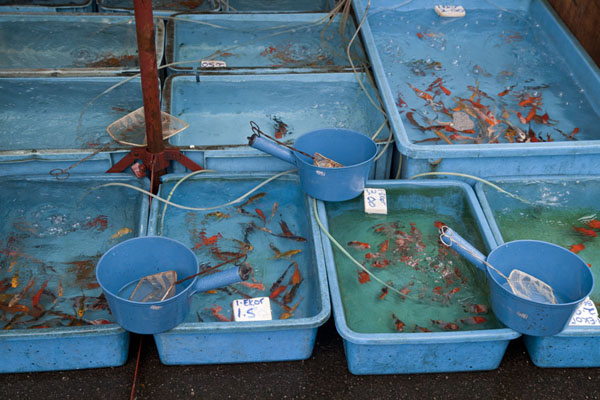 Foto van Fish in buckets at the marketPudu markt - Maleisië
