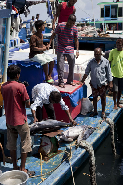 Weighing a tuna on a boat outside the fish market of Malé | Malé Fish Market | Maldives