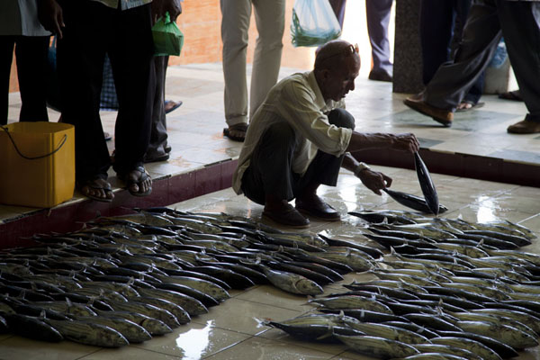 Man arranging his fish in neat rows at the fish market of Malé | Malé Fish Market | Maldives