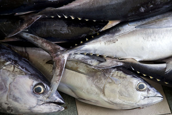 Picture of Yellowfin tuna at the fish market of Malé