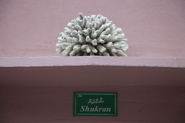 Photo de Coral above the entrance to a houseViligili - Maldives