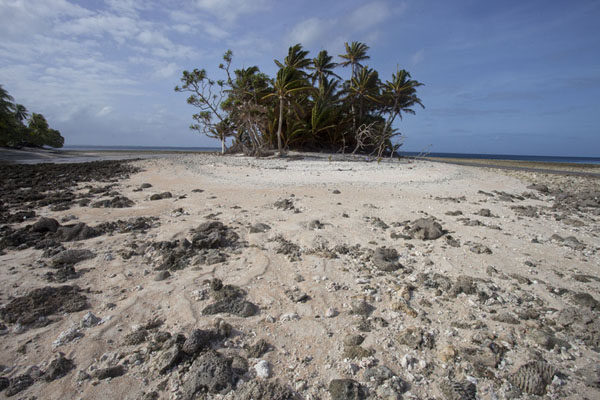 Islet with palm trees east of Eneko island | Eneko Island | Marshall Islands