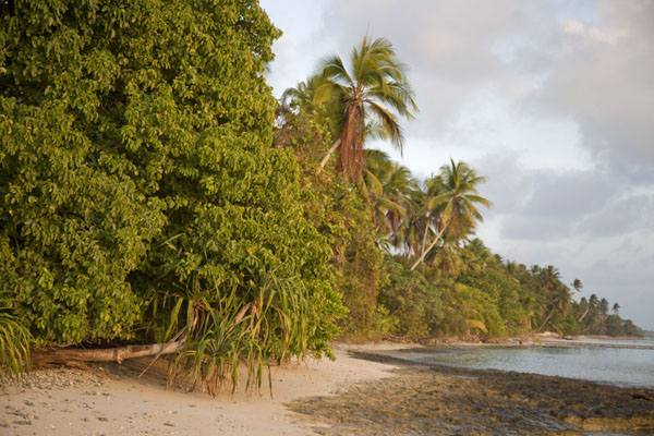 The coastline of Eneko at the lagoon side, with palm and pandanus trees, before sunset | Eneko Island | Marshall Islands