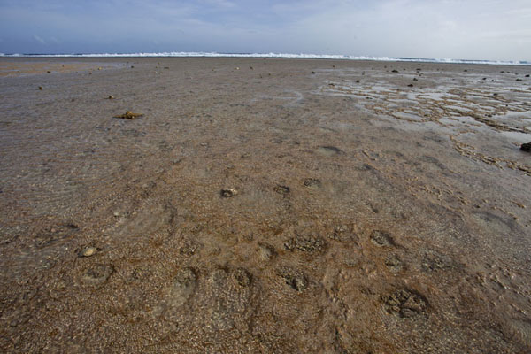 View from one of the islets towards the surf breaking on the surrounding reef | Eneko Island | Marshall Islands