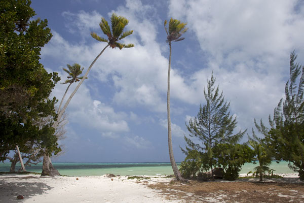 Foto van Tall palm trees at the beach of LauraLaura -